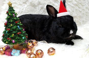 ostrov_1:Белый Кролик